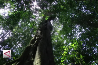 Optimalkan Dana Desa Untuk Lestarikan Lingkungan
