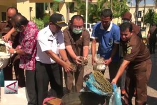 Kejari Aceh  Musnahkan Barang Bukti Nakotika