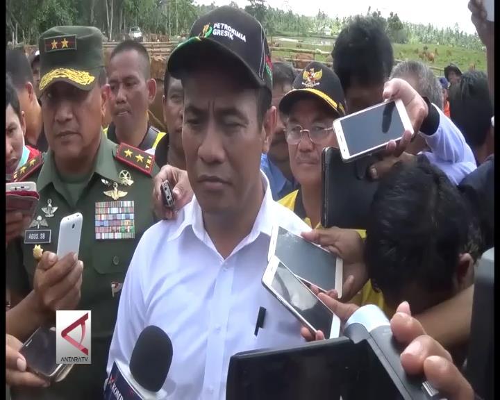 Konsel Ditetapkan Sebagai Wilayah Sumber Bibit Sapi Bali