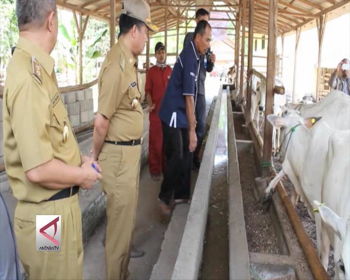 Sawah dan Ternak di Lampung Diasuransikan