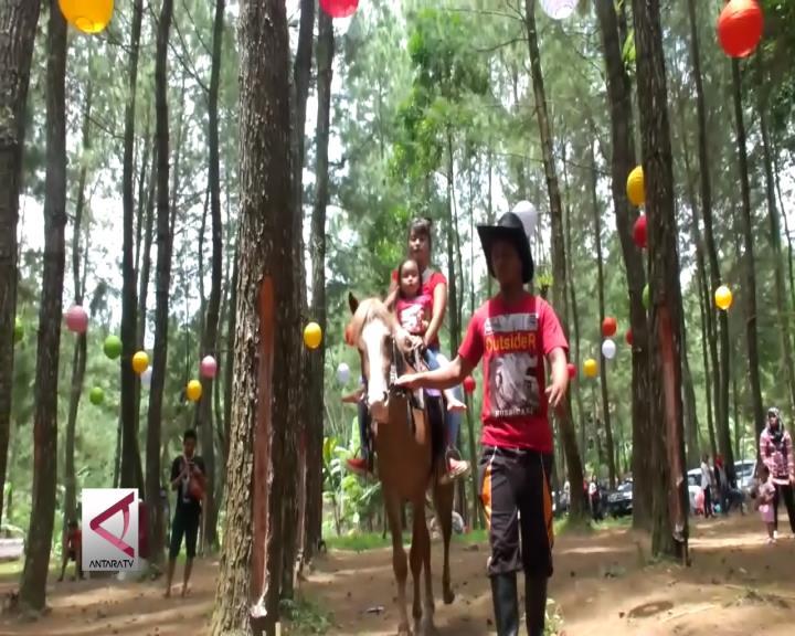 Menghias Hutan Pinus Jadi Obyek Wisata
