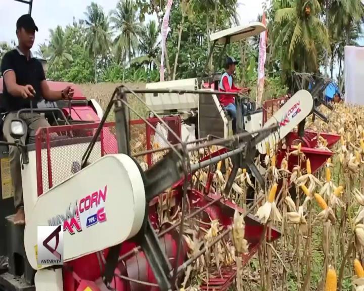 Lampung Targetkan Produksi Jagung Tiga Juta Ton