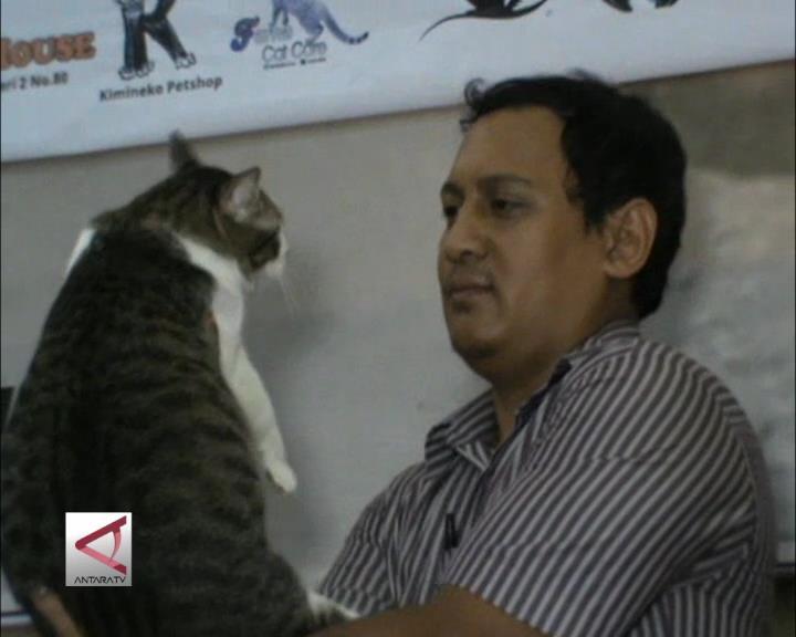 Festival Kucing Kampung