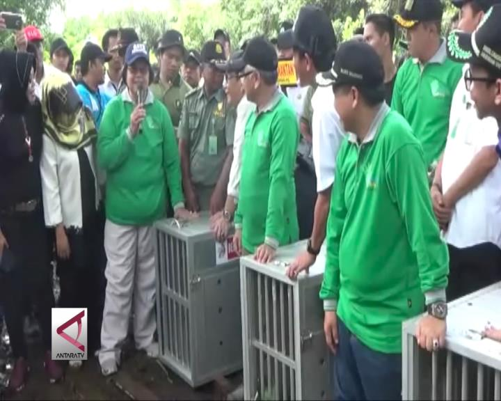 Menteri LH dan Kehutanan Lepas Bekantan Korban Alih Fungsi Lahan