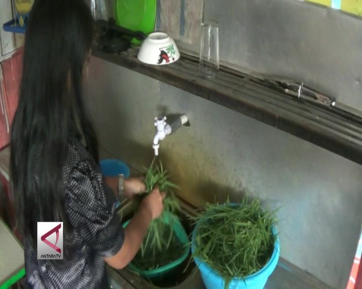 Rumput Ternak Yang Jadi Minuman Kesehatan