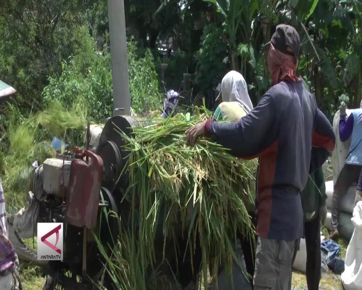 Panglima TNI Soroti Harga Gabah yang Turun