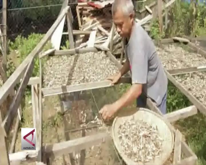 Keumamah, Penganan Warisan Perang dari Aceh