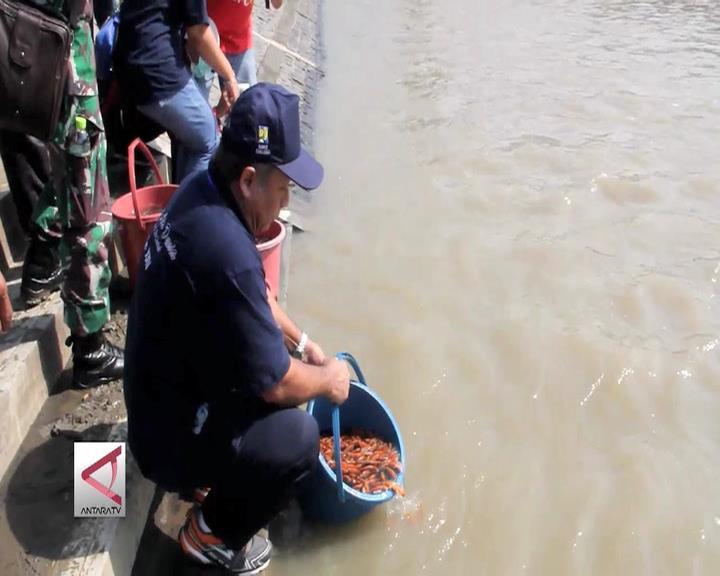 Warga Semarang Tebar Benih Ikan dan Bersih Sungai