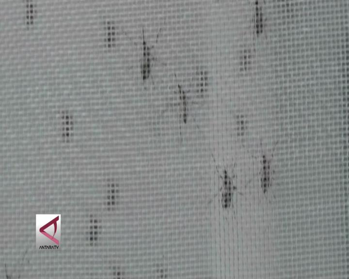 Pelepasan Nyamuk Ber-Wolbachia Diperluas