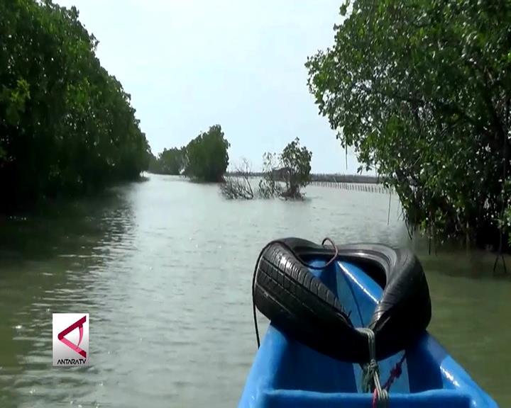 Lahan Tambak Dijadikan Destinasi Wisata Mangrove