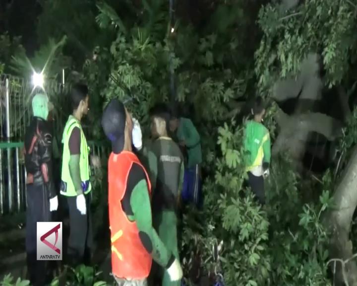 Pemkot Bogor Pangkas Pohon Raksasa