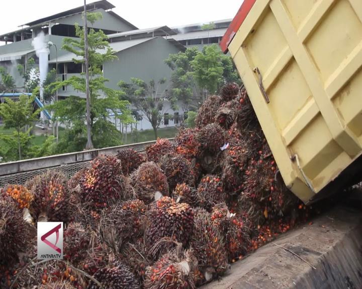 Kalsel Berupaya Perkuat Industri Kelapa Sawit