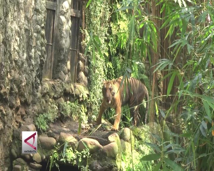 Gubernur DKI: Ragunan Kebun Binatang Termurah di Dunia