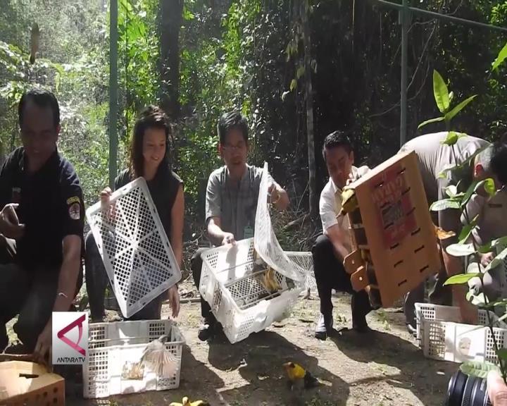 BKSDA NTB Bebaskan Ribuan Burung Langka
