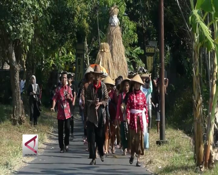 Tradisi Wiwitan Awali Masa Panen Raya Petani