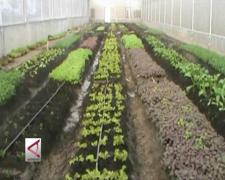 Menyulap Bekas Pabrik Jadi Kebun Sayur Organik