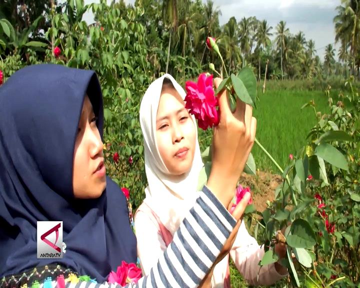 Wisata Petik Bunga Desa Karangpring