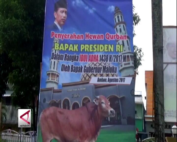 Presiden Joko Widodo Kurban Satu Ekor Sapi di Maluku