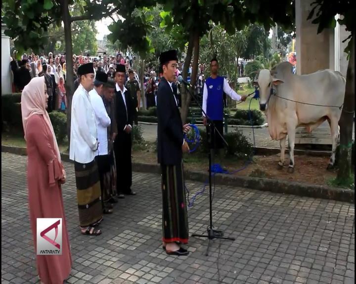 Presiden Jokowi Serahkan 3 Sapi untuk Warga Sukabumi