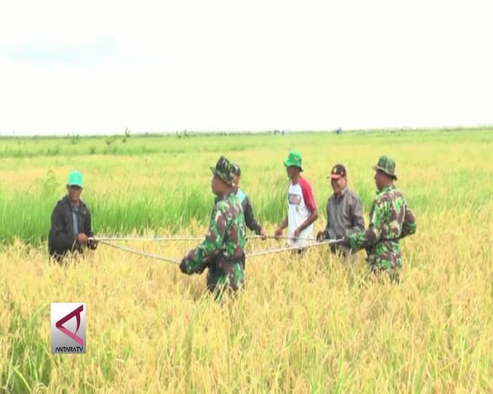 Usaha TNI Meningkatkan Ketahan Pangan  Kalteng