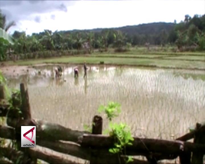 UHO Dampingi Petani Tingkatkan Produksi Pangan