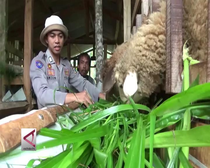 Polisi Yang Memberdayakan Mantan Napi Beternak Domba
