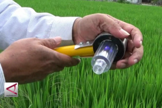 DIY terapkan paket teknologi pangan dalam satu lahan