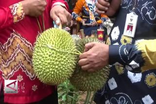 Agrowisata Durian di Desa Biih