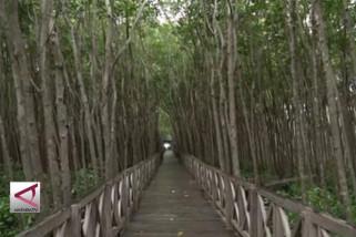 Mengunjungi kawasan wisata Mangrove terluas di Indonesia