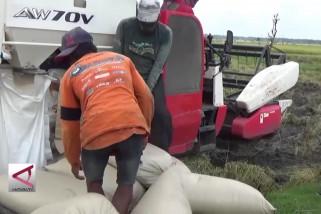Produksi padi Kabupaten Madiun surplus