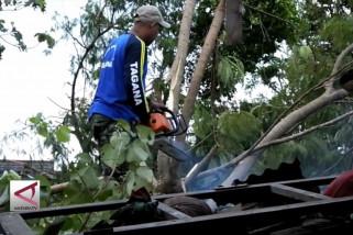 Rumah dan Pepohonan di Banguntapan Rusak