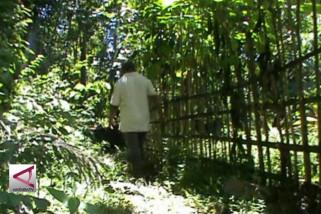 Indonesia Tekankan Pentingnya Hutan di APRS