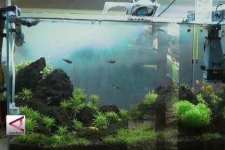 Mengkreasikan ekosistem air dalam bingkai aquascape