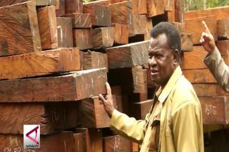 Dishut Papua amankan 4 truk kayu ilegal