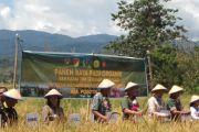 Panen raya padi bersama TNI di Desa Badangkaia, Poso