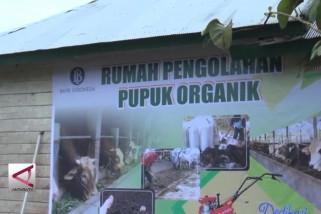 Dijadikannya desa Aunupe percontohan pertanian organik