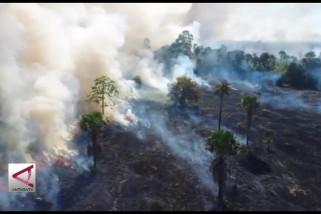 Lagi, kawasan hutan lindung terbakar