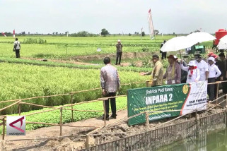 Asuransi tani bantu jaga produktivitas pertanian