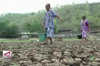 Status darurat kekeringan untuk Kabupaten Gunungkidul