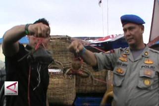 Penyelundupan 2607 ekor kepiting telur di gagalkan