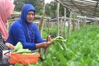 Mengolah sisa sayuran menjadi lembaran rupiah