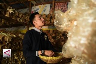 Wisata edukasi rumah jamur di Pekanbaru
