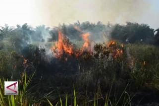 Polisi tangkap enam tersangka pembakar hutan Riau
