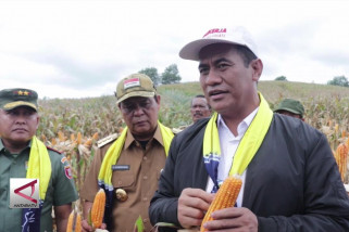 Kalsel integrasikan sawit-jagung