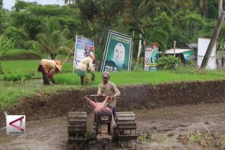 Turun temurun, suku Osing menyongsong pesta demokrasi