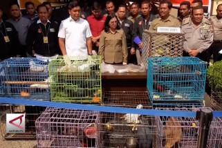 Serentetan kasus penyelundupan satwa di Sumut