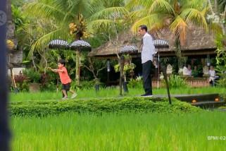 Makan siang di Ubud, Presiden dan cucunya main di tepi sawah