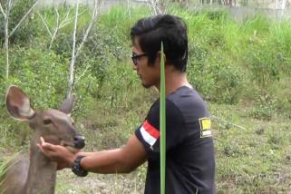 Nyaris punah, bayi kijang Sumatera lahir di PPS Alobi