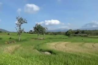 Musim kemarau maju, 167 hektar tanaman padi di Magetan puso