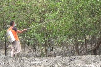 Cegah penyebarluasan hama, Dinas Pertanian Bangka Belitung lakukan penyemprotan